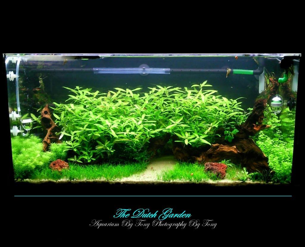 Aquarium the dutch garden par fasciatum for Bac a poisson 500l