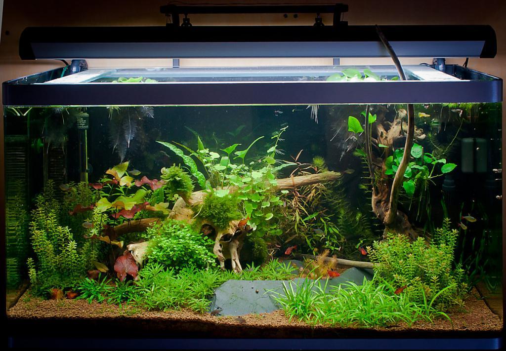 Aquarium l 39 osaka par sylvaner for Aquarium osaka 260