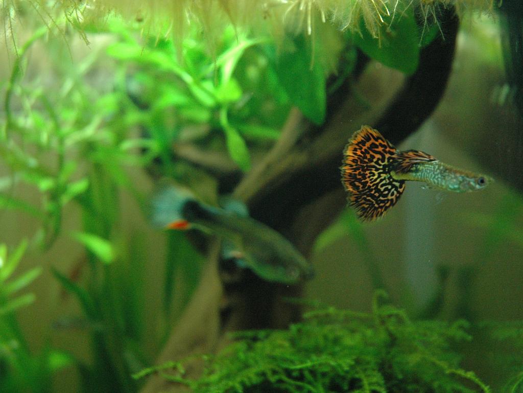 Aquarium nano aquarium 20l zolux par robin59 for Aquarium zolux