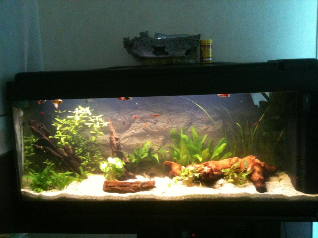 Aquarium Aquarium 120l Par Platy62