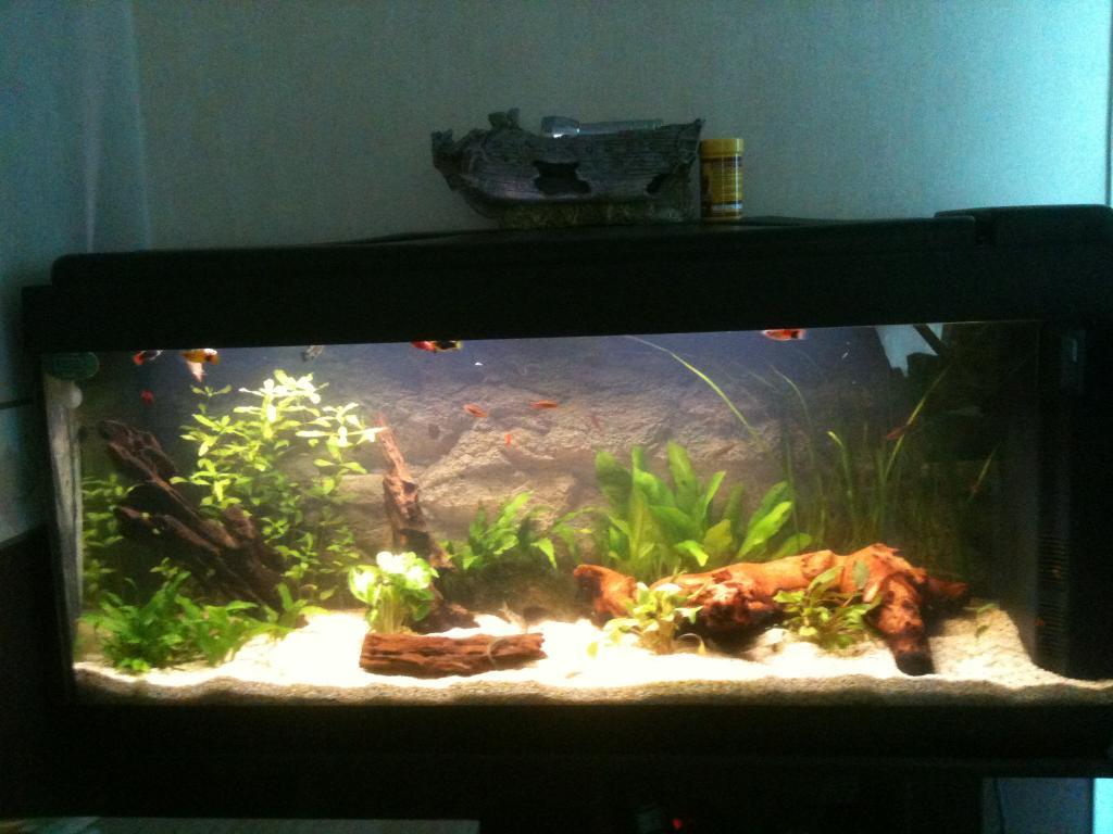 aquarium aquarium 120l par platy62. Black Bedroom Furniture Sets. Home Design Ideas