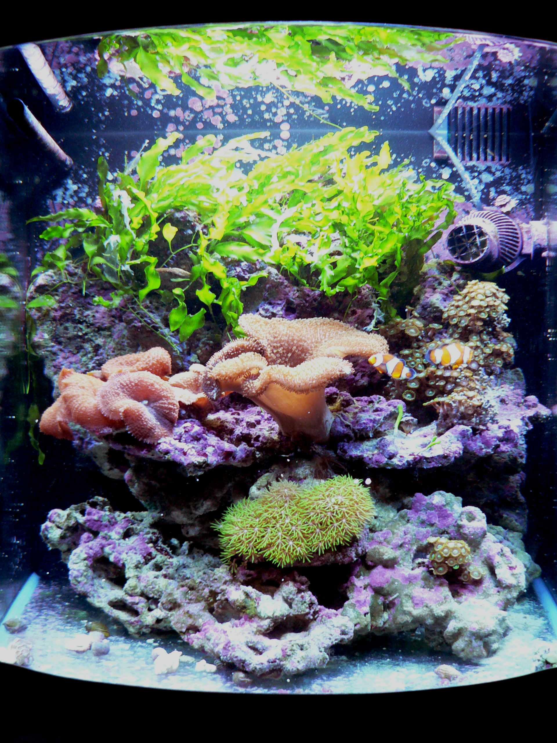 photo http://www.aquariophilie.org/aquarium/images/aq154ph1.jpg