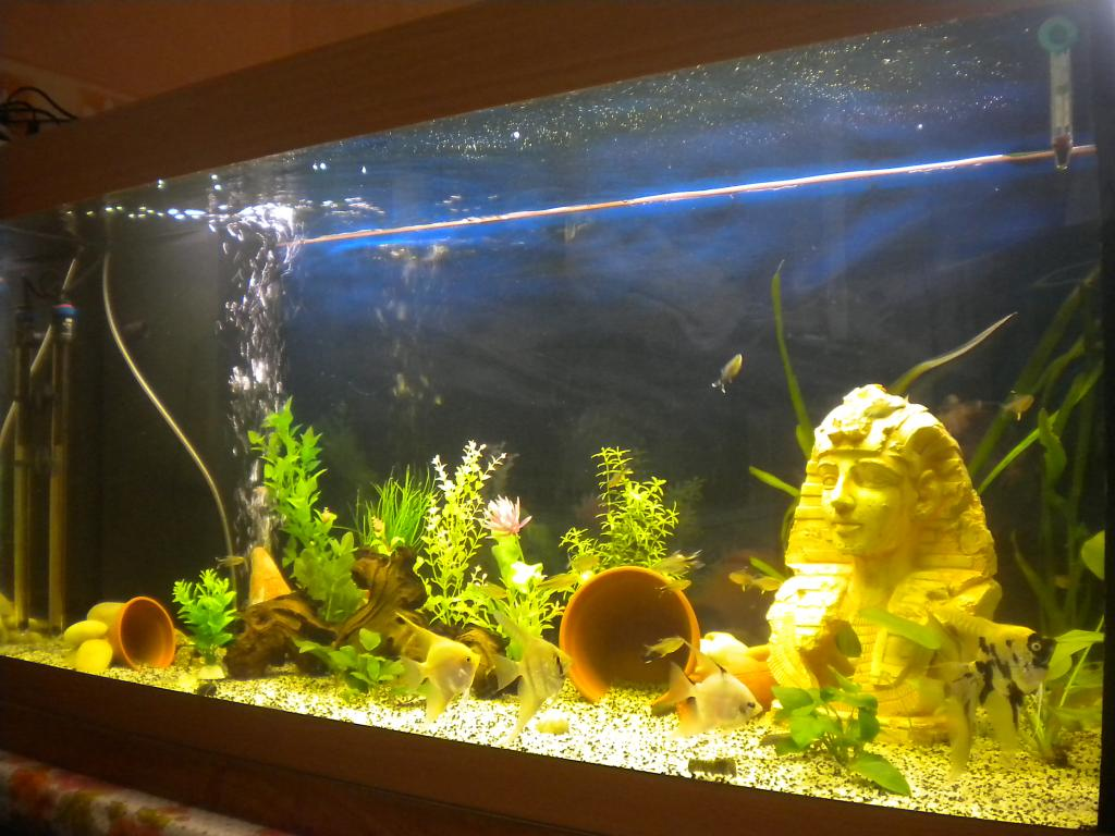 50 Watt Aquarium Heater