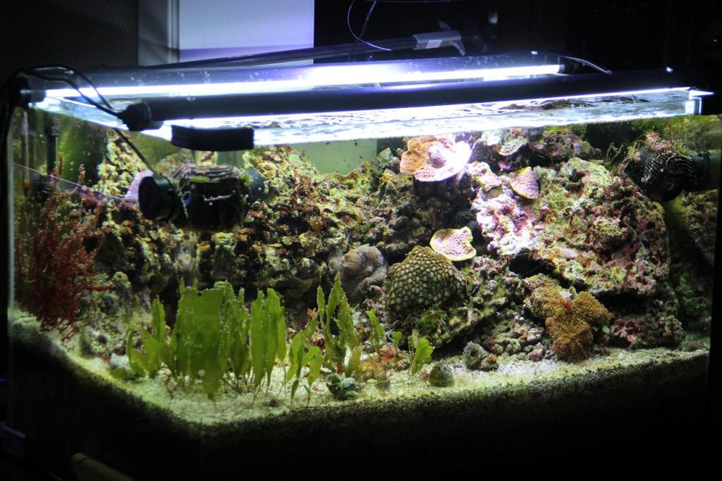 aquarium herbier et r cif jaubert par gabrielgab. Black Bedroom Furniture Sets. Home Design Ideas