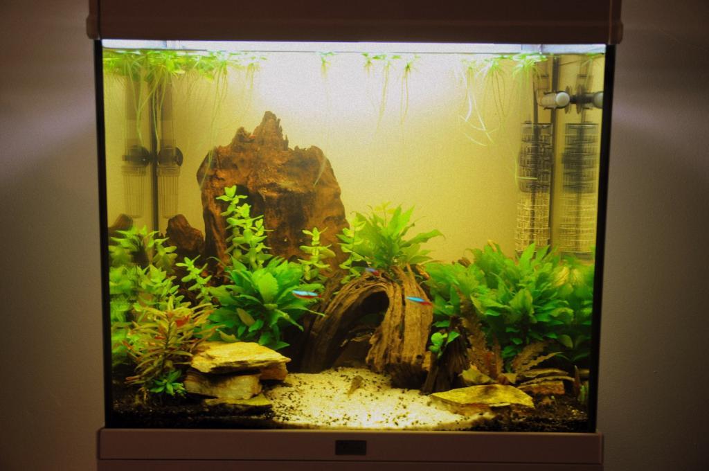 Aquarium aquatlantis elegance 58 par dison123 for Bac a poisson 500l