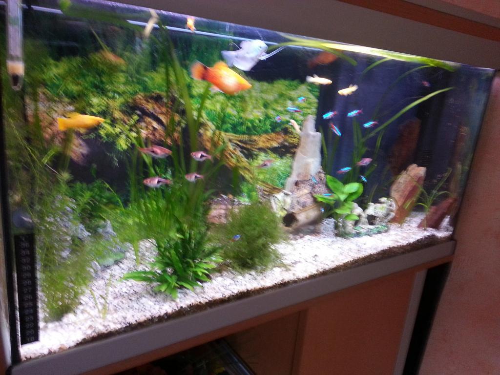 aquarium aquadisio 150 litres par sisko28. Black Bedroom Furniture Sets. Home Design Ideas