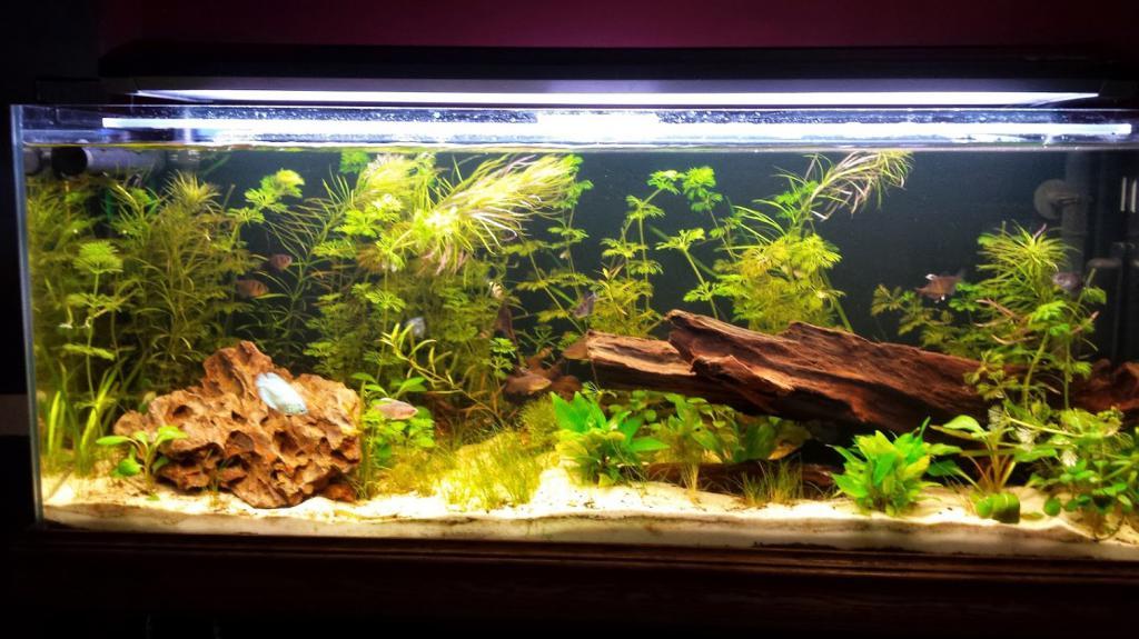 Aquascape Com 90x45x45 Aquascape Design Aquariums Aquascaping And Vivarium Seiryu Stone