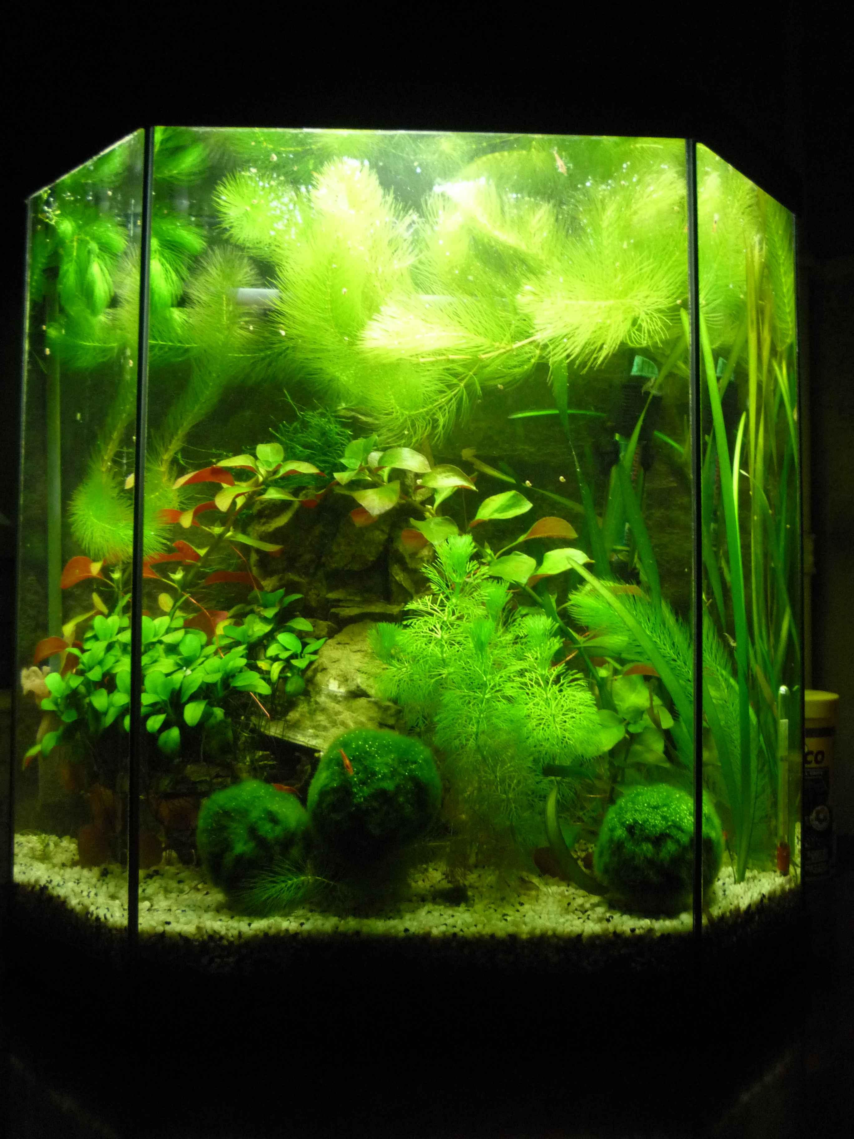 Aquarium 30l for Poisson aquarium 30l