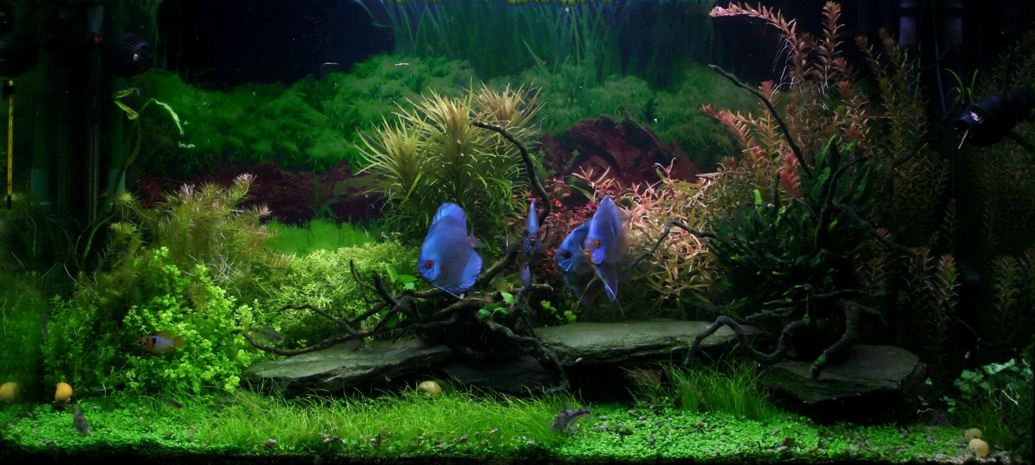 Comment devenir aquariophile for Aquarium maison