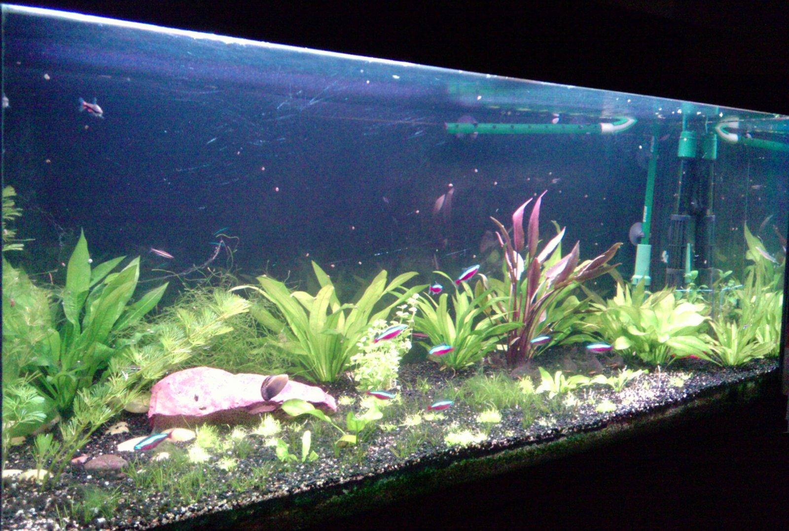 aquarium mon premier aquarium par nebojsa