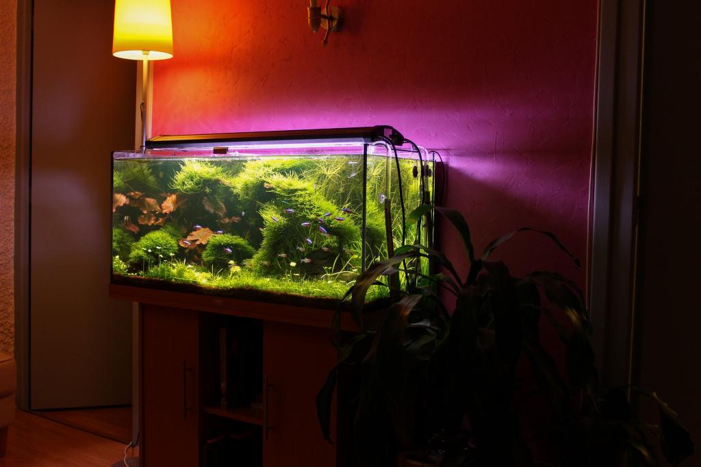Achat aquarium ouvert for Aquarium ouvert