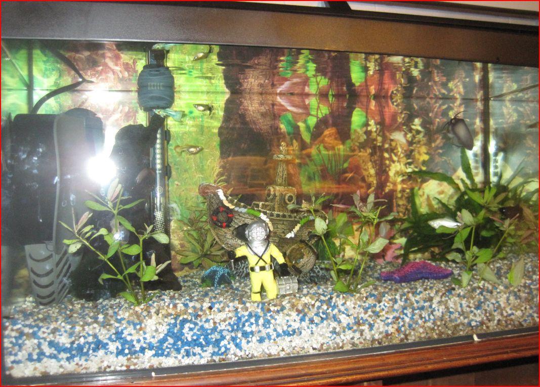 Aquarium mon petit bac par pouilloute for Petit bac a poisson