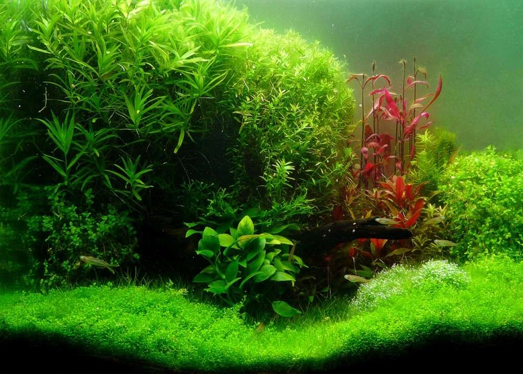 photo http://www.aquariophilie.org/aquarium/images/aq76ph340.jpg