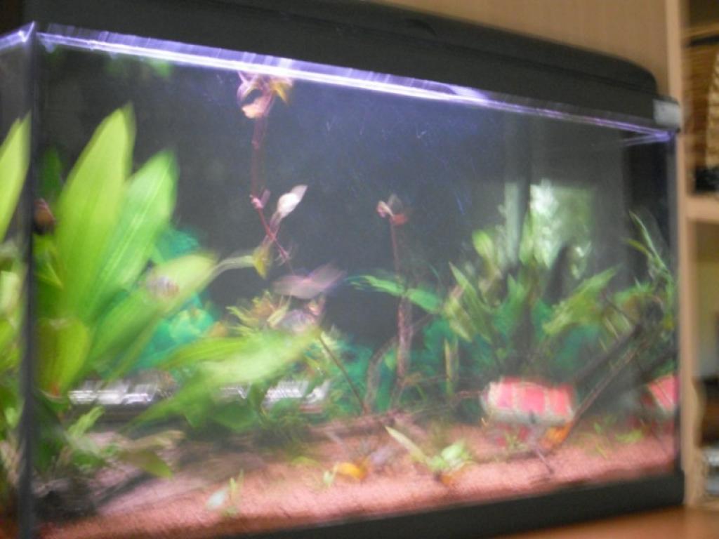 Aquarium aquarium 60l par aquaur21 for Poisson aquarium 60l