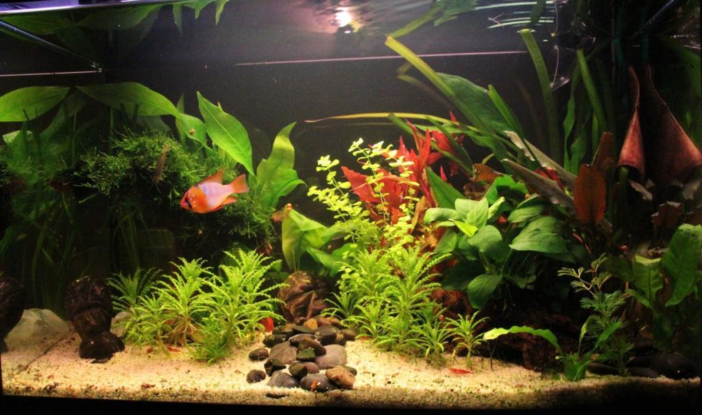 Decoration Aquarium Vide Sans Eau Ni Poisson