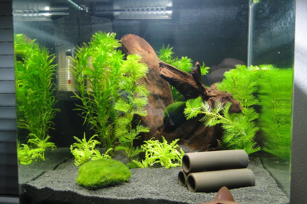 Aquarium nanocube 30l par melboz for Poisson aquarium 30l