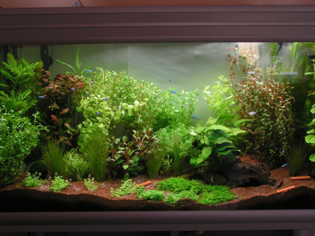 Aquarium aquatlantis 1 er bac par drag for Aquarium bac