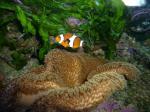 photo http://www.aquariophilie.org/aquarium/images/mini150_aq154ph198.jpg