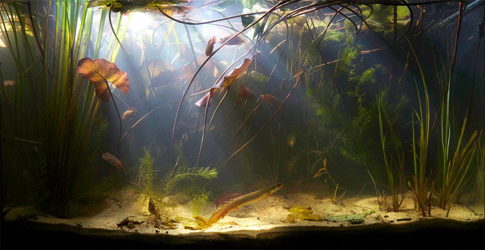 la nature et son incarnation dans l aquarium realites et