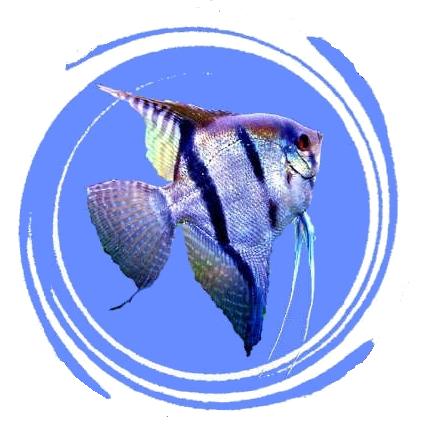 Association for Site aquariophilie