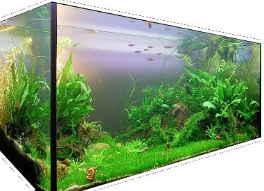 Aquarium de Fasciatum Le Jardin d'Emeraude