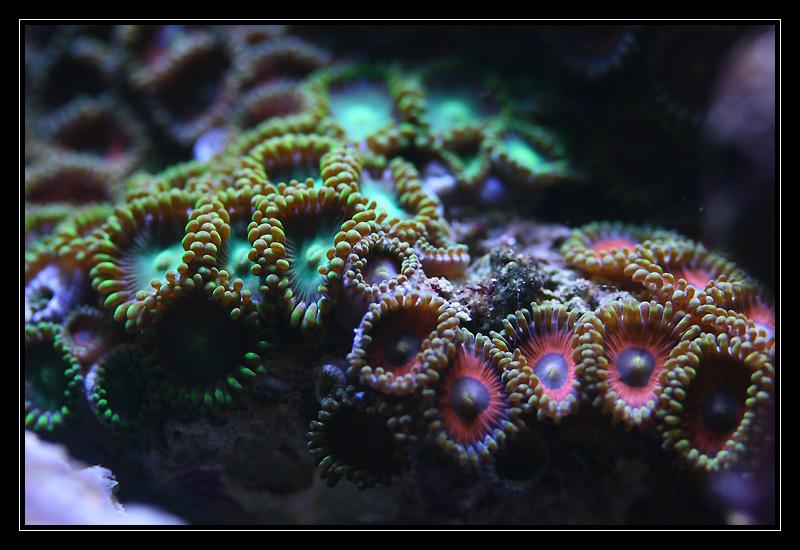 photo http://www.aquariophilie.org/images/article/Comment_monter_un_bac_recifal__a10281316_1.jpg