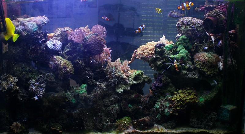 photo http://www.aquariophilie.org/images/article/Comment_monter_un_bac_recifal__a10281316_11.jpeg
