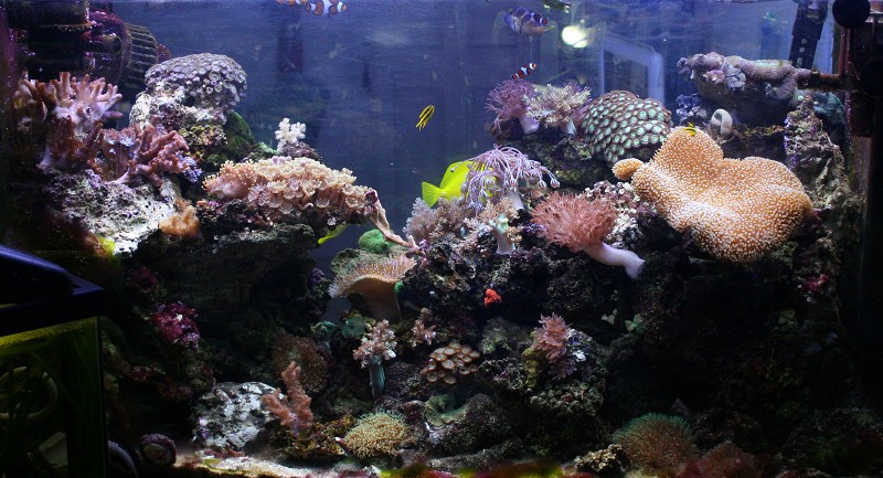 photo http://www.aquariophilie.org/images/article/Comment_monter_un_bac_recifal__a10281316_12.jpeg