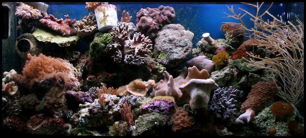 photo http://www.aquariophilie.org/images/article/Comment_monter_un_bac_recifal__a10281316_2.jpg