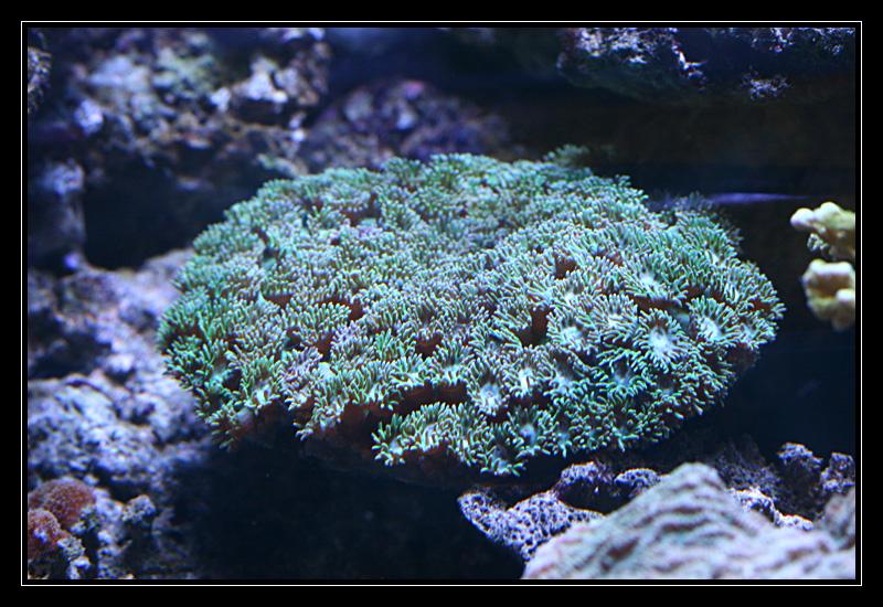 photo http://www.aquariophilie.org/images/article/Comment_monter_un_bac_recifal__a10281316_3.jpg