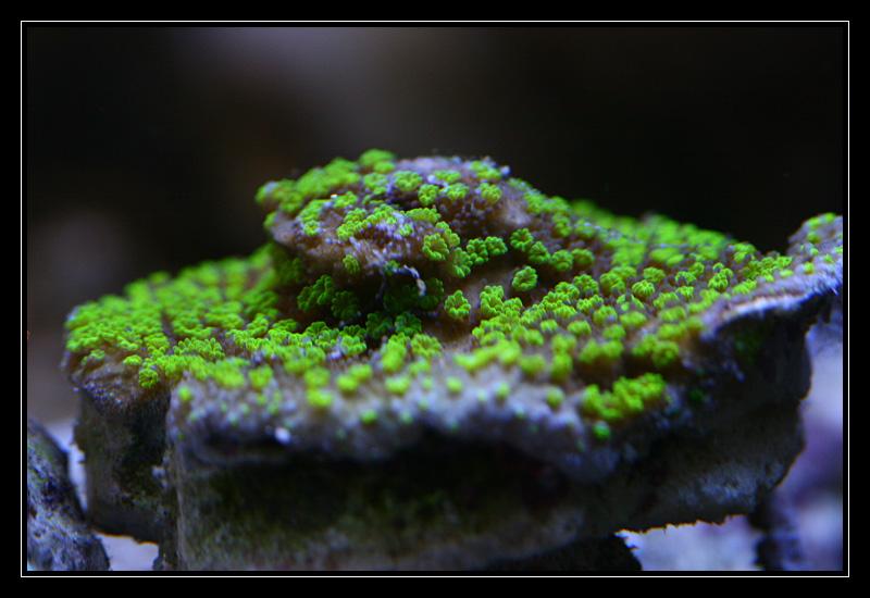 photo http://www.aquariophilie.org/images/article/Comment_monter_un_bac_recifal__a10281316_6.jpeg