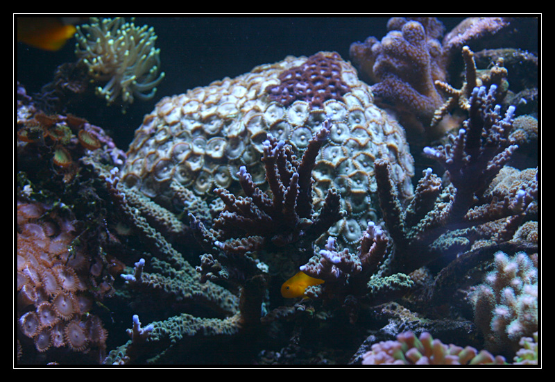 photo http://www.aquariophilie.org/images/article/Comment_monter_un_bac_recifal__a10281316_8.jpg