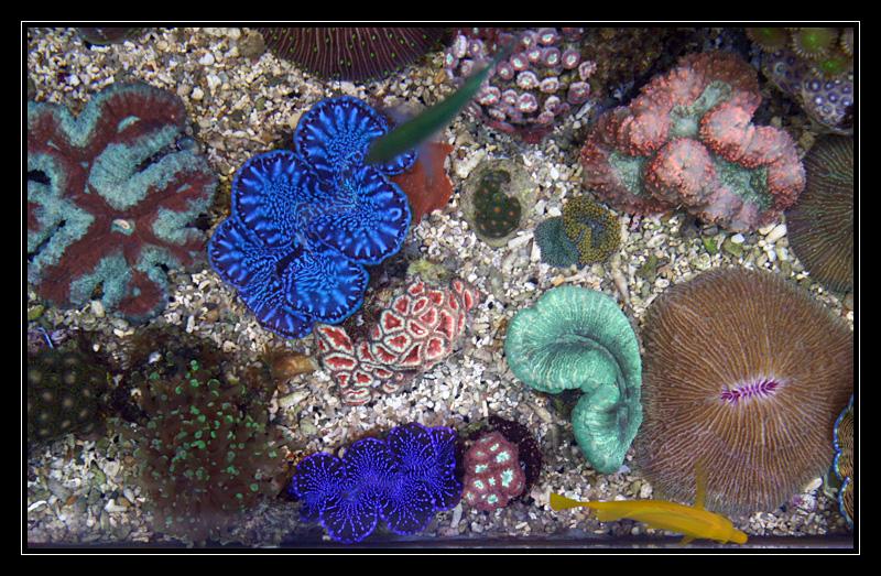 photo http://www.aquariophilie.org/images/article/Comment_monter_un_bac_recifal__a10281316_9.jpg