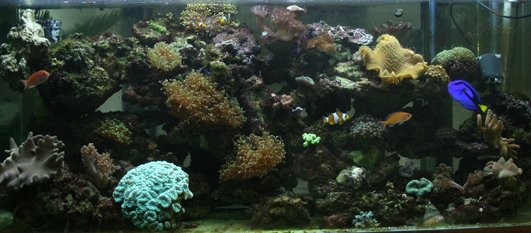 photo http://www.aquariophilie.org/images/article/Comment_monter_un_bac_recifal__a10281452_15.jpeg
