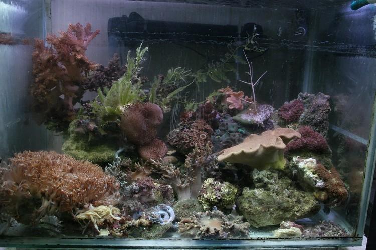 photo http://www.aquariophilie.org/images/article/Comment_monter_un_bac_recifal__a10281452_17.jpeg