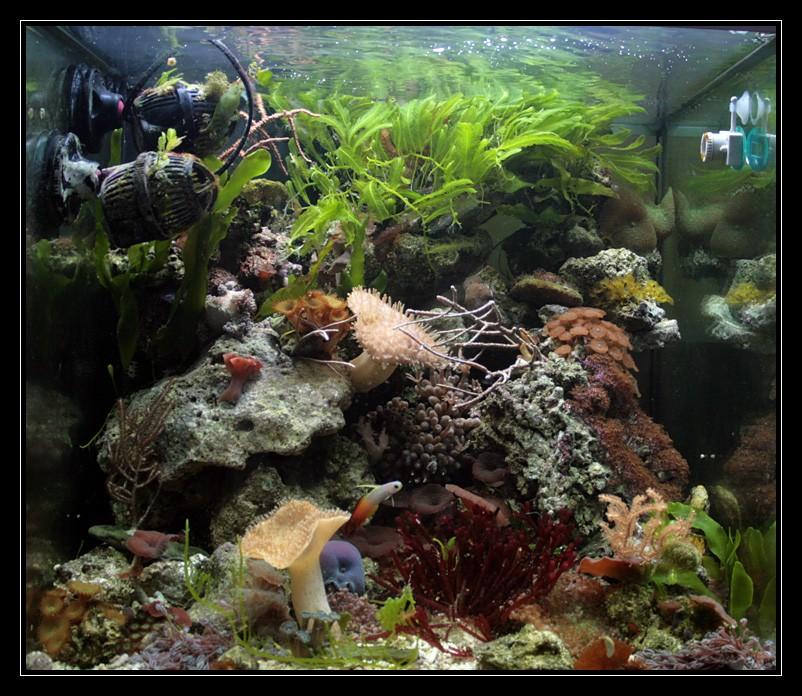 photo http://www.aquariophilie.org/images/article/Comment_monter_un_bac_recifal__a10281452_18.jpeg