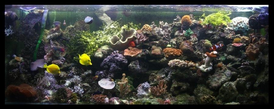 photo http://www.aquariophilie.org/images/article/Comment_monter_un_bac_recifal__b10281452_1.jpeg