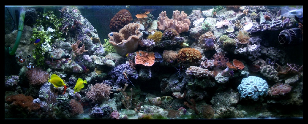 photo http://www.aquariophilie.org/images/article/Comment_monter_un_bac_recifal__b10281452_2.jpeg