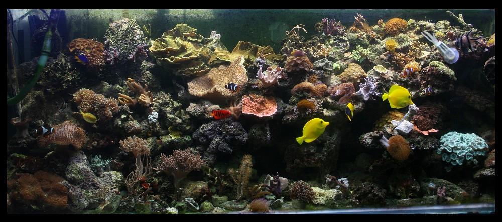 photo http://www.aquariophilie.org/images/article/Comment_monter_un_bac_recifal__b10281452_3.jpeg
