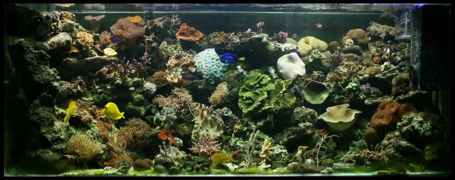 photo http://www.aquariophilie.org/images/article/Comment_monter_un_bac_recifal__b10281452_4.jpeg