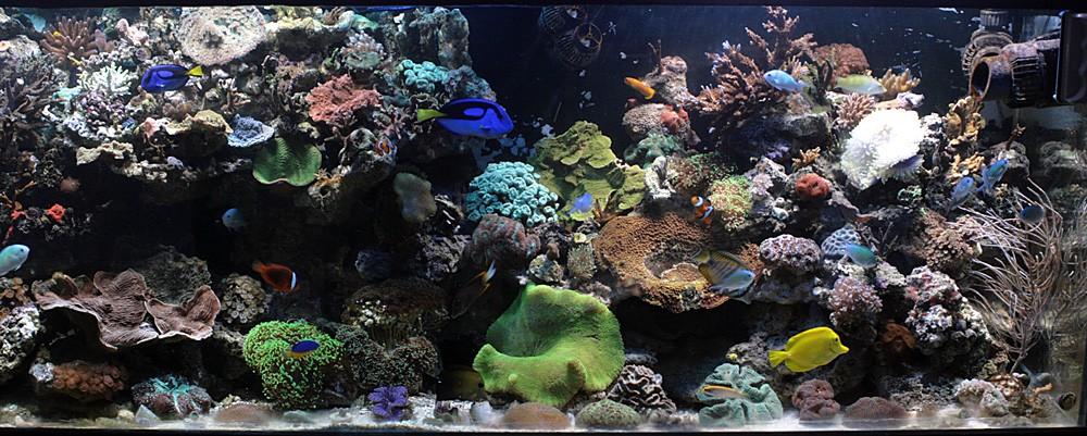 photo http://www.aquariophilie.org/images/article/Comment_monter_un_bac_recifal__b10281452_6.jpeg