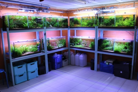 photo http://www.aquariophilie.org/images/article/Elevage-de-crevettes-dulcicole-par-un-amateur_a07261214_0.jpeg