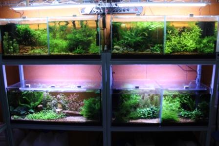 photo http://www.aquariophilie.org/images/article/Elevage-de-crevettes-dulcicole-par-un-amateur_a07262124_2.jpeg