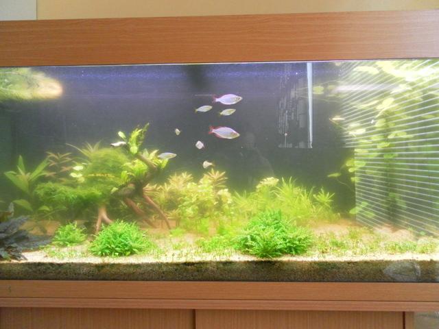 photo http://www.aquariophilie.org/images/article/Identification-et-lutte-contre-les-algues_b11291414_0.jpeg