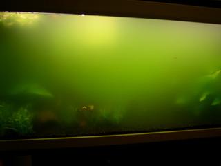 photo http://www.aquariophilie.org/images/article/Identification-et-lutte-contre-les-algues_b11291414_2.jpeg