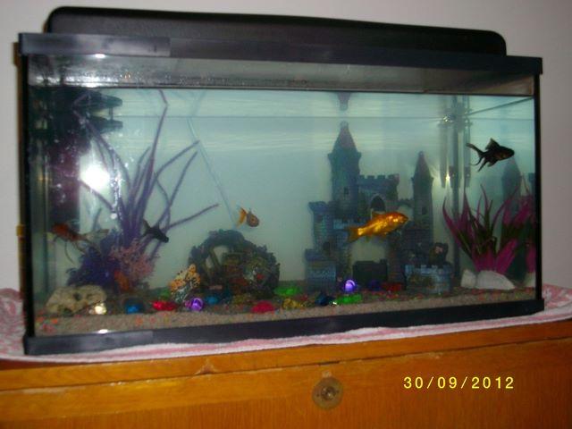 photo http://www.aquariophilie.org/images/article/Journal-d-une-Aquariophile-I-Le-Depart_a09301056_0.jpeg