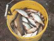 photo http://www.aquariophilie.org/images/article/Journal_d_une_peche_d_un_petit_etang_ou_l_entretien_d_un_bac_peu_ordinaire_a12162242_23.jpeg