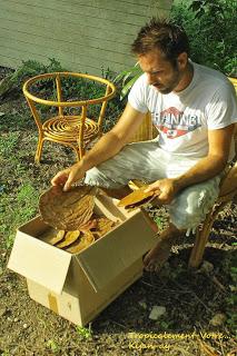 photo http://www.aquariophilie.org/images/article/La-Catappa-De-l-Arbre-a-l-Aquariophile-_a10241601_16.jpeg