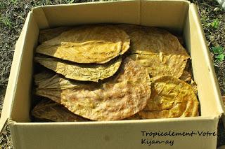 photo http://www.aquariophilie.org/images/article/La-Catappa-De-l-Arbre-a-l-Aquariophile-_a10241601_17.jpeg