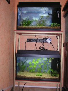 photo http://www.aquariophilie.org/images/article/Le_cyclage_d_un_bac_neuf_avec_l_aide_des_bacteries_par_l_atelier_de_l_Association_Aquariophilie_org_a01171404_7.jpeg